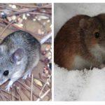 Peles dzīve