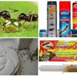 Means to fight ants