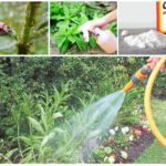 Insect control methods