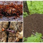 Anthill and ants