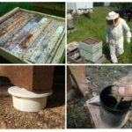 Skudras biškopībā