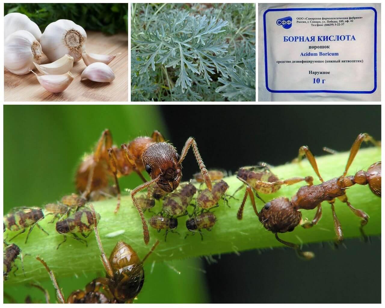 Augi cīņā pret kukaiņiem