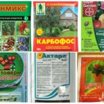 Effective toxic chemicals from aphids