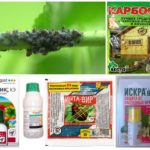 Biological and chemical preparations