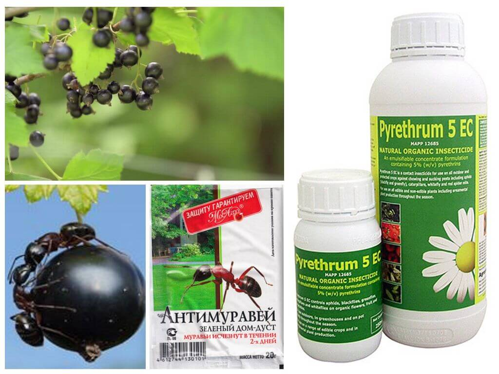 Professional ant products