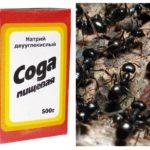 Soda Fighting Ants