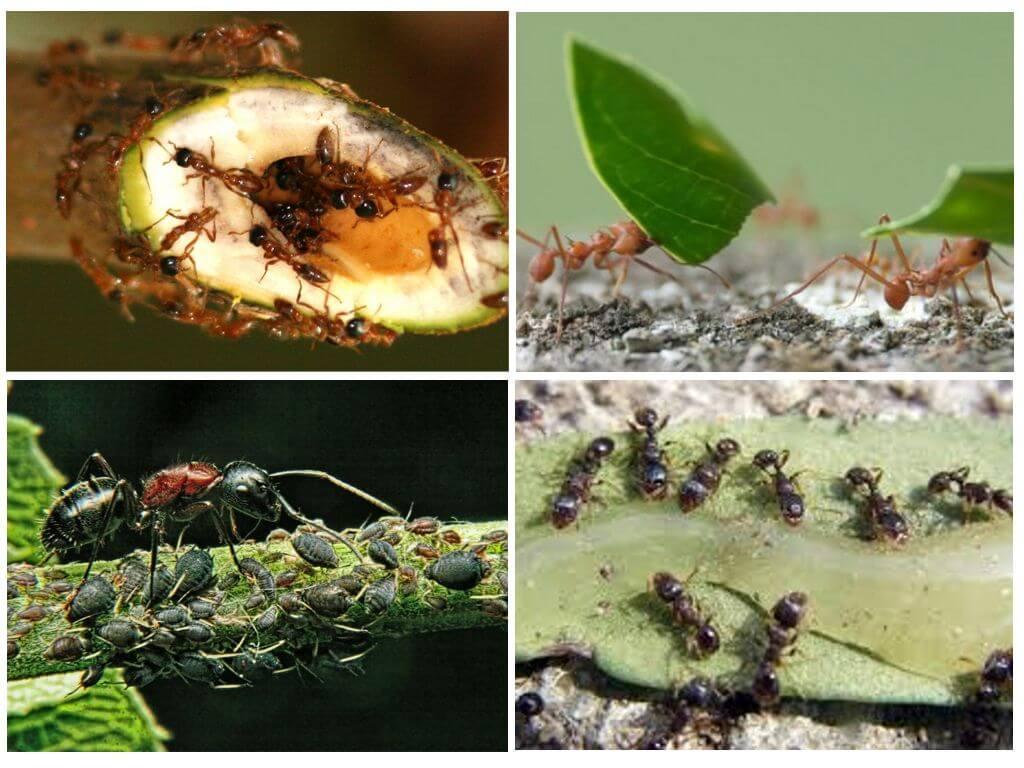 היתרונות והנזקים של הנמלים