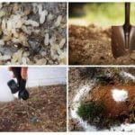 Ants kontroles metodes