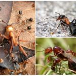 Forest ant life