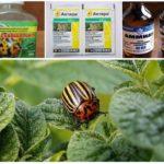 Methods of dealing with leaf beetles