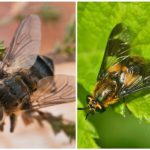Gadfly and gadfly
