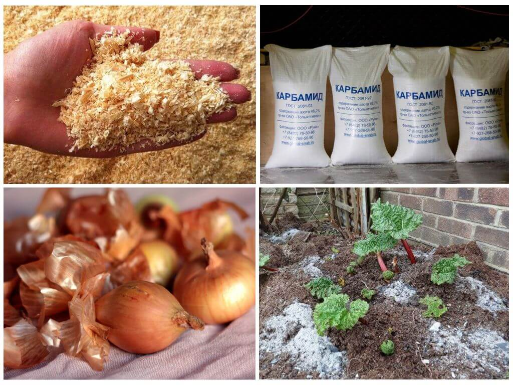 דרכים להילחם חיפושית תפוחי אדמה קולורדו