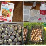 Tabu no Colorado kartupeļu vaboles