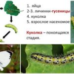 Butterfly Bowl Development Cycle