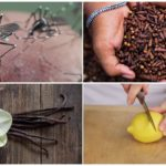 Insect repellent methods
