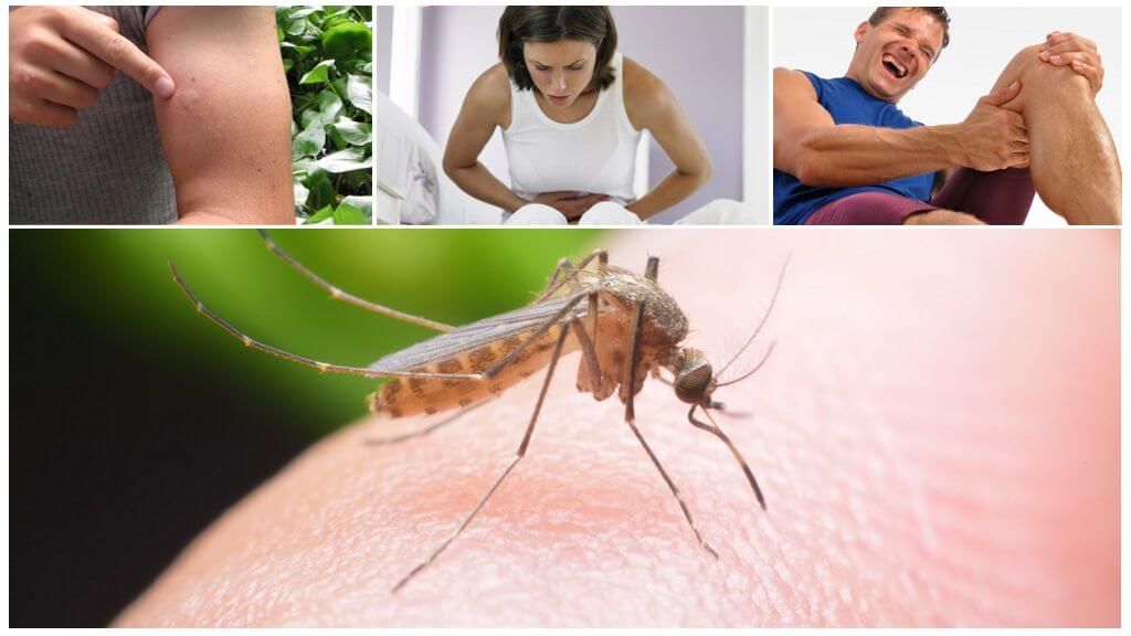 Consequences of the Malaria Mosquito Bite